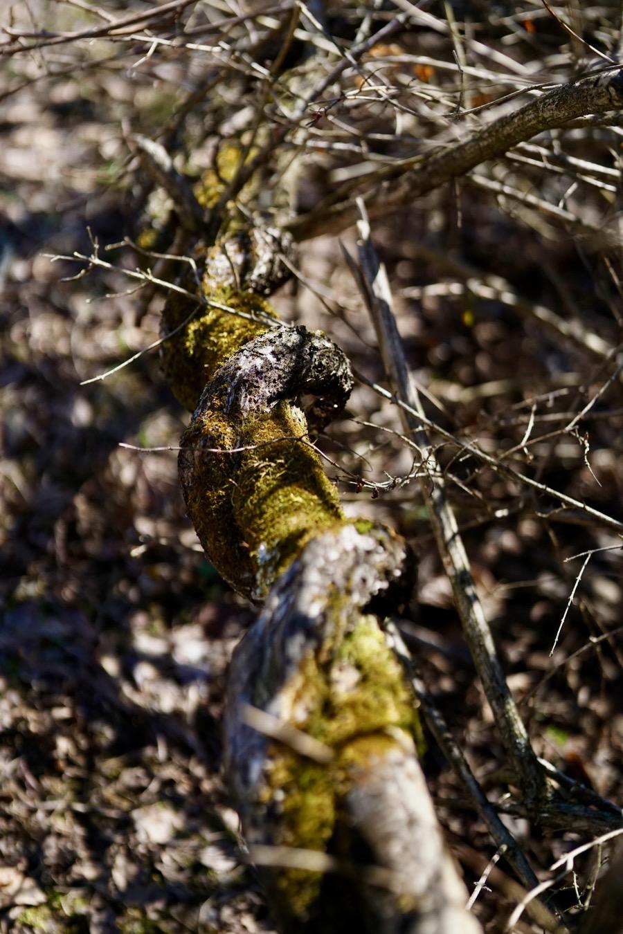 moss and twist